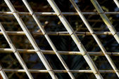 Bambus textury — Stock fotografie