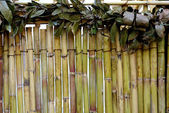Bamboo and leafs — Stock Photo