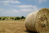Rural field with circular hay bales — Stock Photo