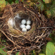 Foto Stock: Bird nest with eggs