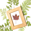 Dried maple leaf in a frame — Stock Photo