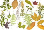 Herbarium. — Zdjęcie stockowe