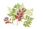 Suszonych liści — Zdjęcie stockowe