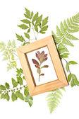 在一个帧中的红干的植物 — 图库照片