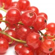 Stock Photo: Red currant.