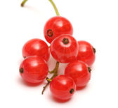 Red currant. — Stock Photo