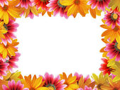 Flower frame 4 — Stock Photo