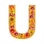 花の手紙 u — ストック写真