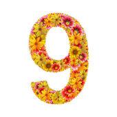 цветы номер девять — Стоковое фото