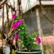 Royalty-Free Stock Photo: Hanging flowers in a green pot.