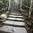 Foto de Stock  : Stone ladder in green jungle.