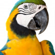 Portrait of tropical  wild parrot. - Stock Photo