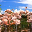 Group of flamingos against blue sky. — Stock Photo