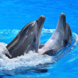 Couple of dolphin in blue water. - Stock Photo