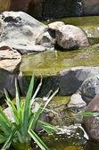 Spring water running on stone. — Stock Photo