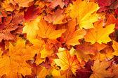 Foglie di sfondo gruppo autunno arancione. — Foto Stock