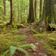 Old growth Forest path — Stock Photo