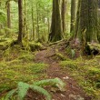 Old growth Forest path - Stock Photo