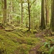 Pacific Northwest Rain Forest - Stock Photo