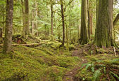 Pacific Northwest Rain Forest — Stock Photo
