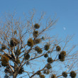 Stock Photo: Tree and moon
