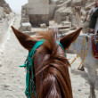 On horse ride by the pyramids in Cairo - Stock Photo