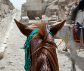 On horse ride by the pyramids in Cairo — Stock Photo
