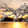 Cherry blossoms against sunset — Stock Photo