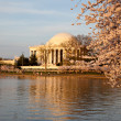 Jefferson Memorial behind cherry blossom — Stock Photo