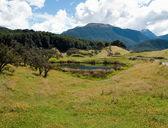 Rolling countryside in New Zealand — Stock Photo