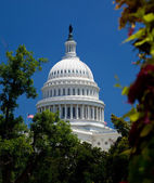 Capitol Building framed by trees — Stock Photo