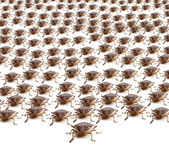Army of Brown Stink Bugs — Stock Photo