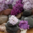 Rock pile with flowers — Stock Photo