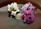 Rocks, flowers, and water — Stock Photo
