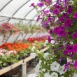 Down the greenhouse — Stock Photo #3695417