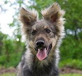 Treuer hund — Stockfoto