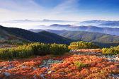 Mountain autumn — Stock Photo