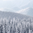 Winter in mountains - Stockfoto