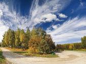 Autumn trees — Stock Photo