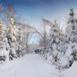 Winter trees — Stock Photo #3604244