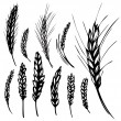 Royalty-Free Stock Vector Image: Rye, wheat