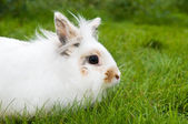 White rabbit on green grass — Stock Photo