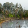 Morning in taiga forest. Fog on surface - Stock Photo