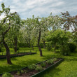 Apple trees garden in spring time. - Stock Photo