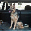 Alsatian dog in back seat of car. — Stock Photo #3304543