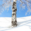 Foto Stock: Winter tree