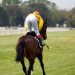 Horse at gallop race at hippodrome — Stock Photo