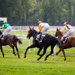 Horse at gallop race at hippodrome - Stock Photo
