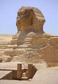 Sphinx statue — Stock Photo