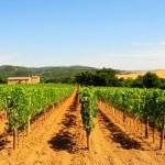 Vineyard — Stock Photo #3598846
